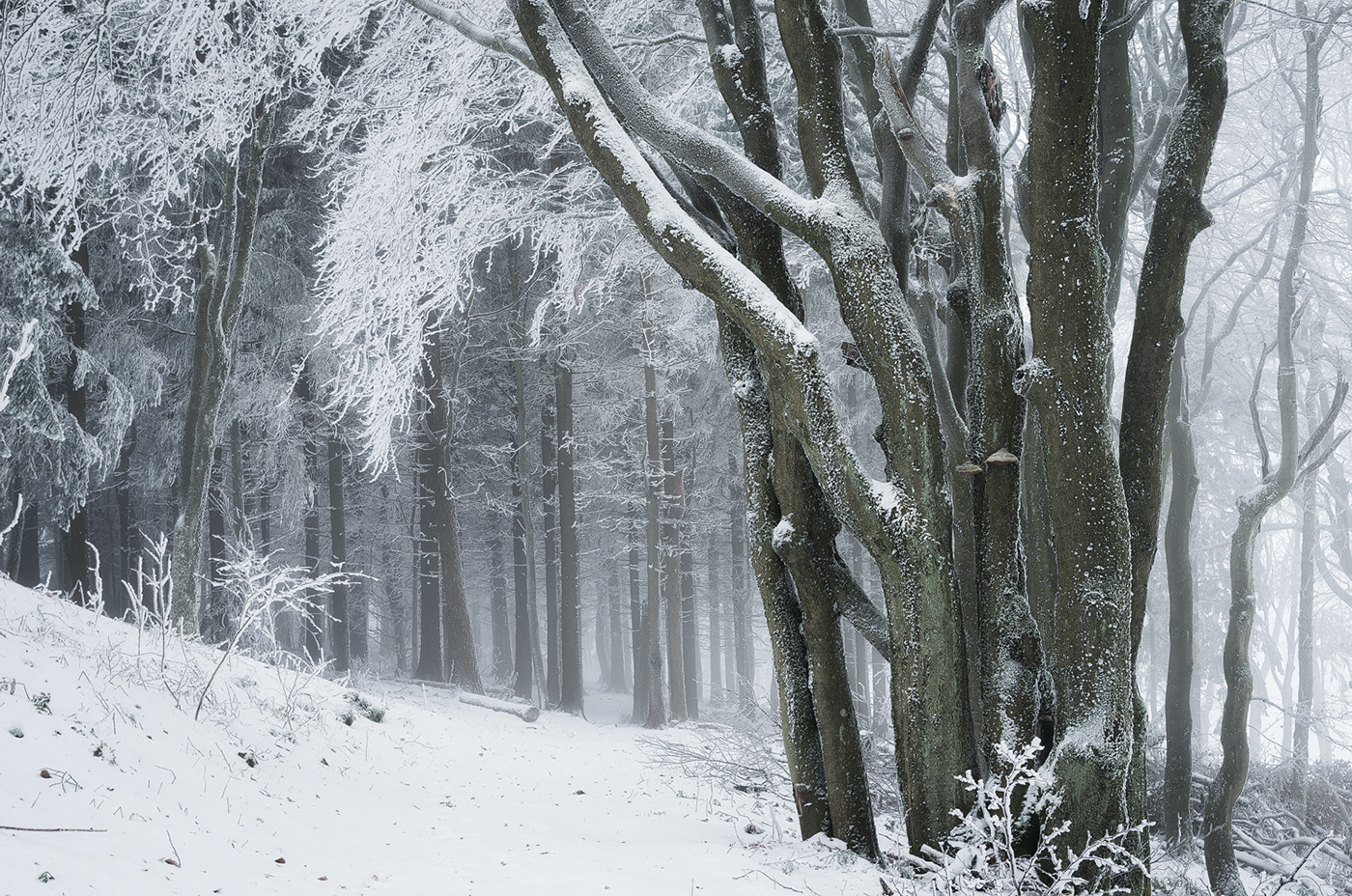 winter forest woods snow trees