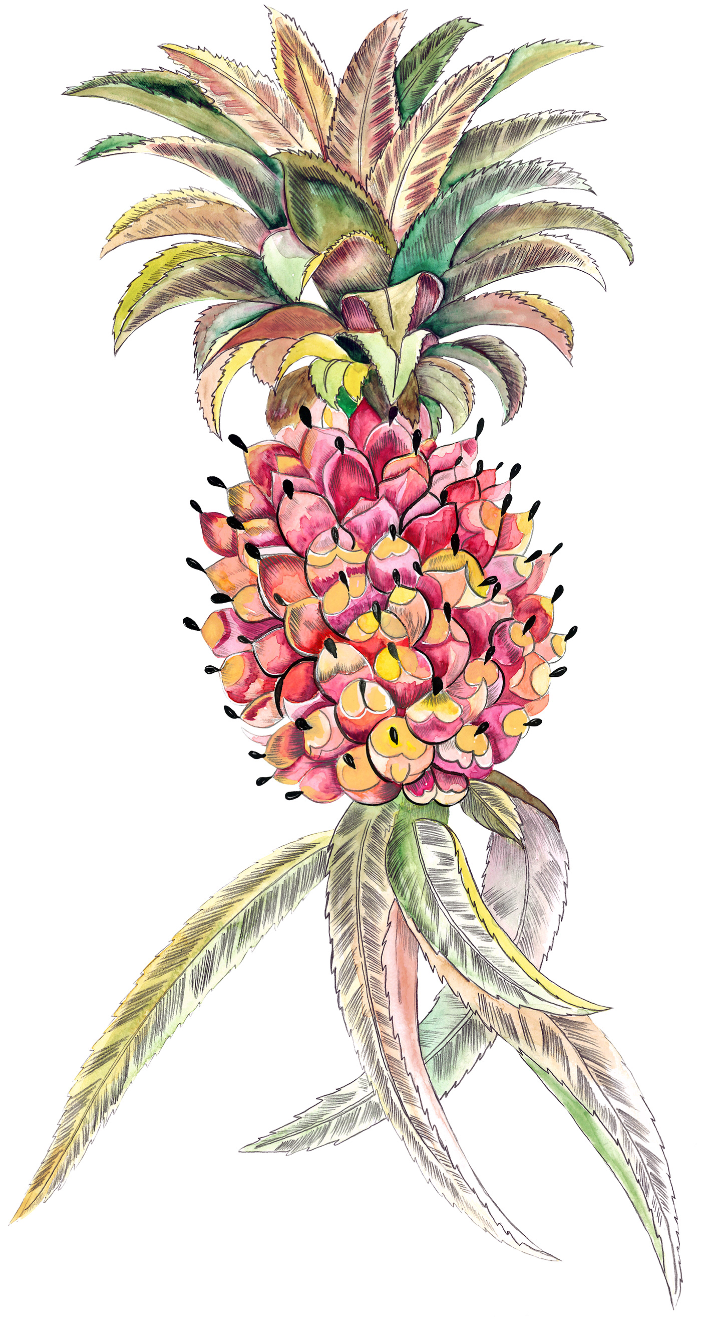 Image may contain: flower, drawing and art