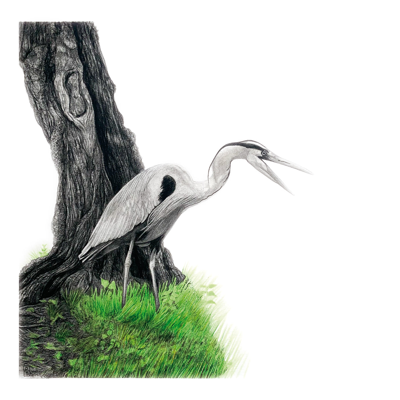 bird Drawing  heron pencil Tree
