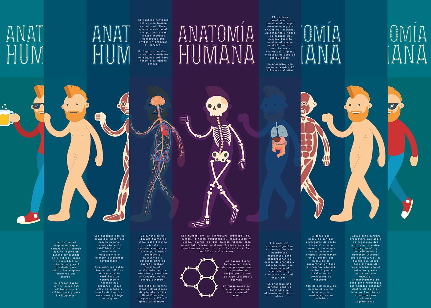 Anatomía Humana - infografía on Behance