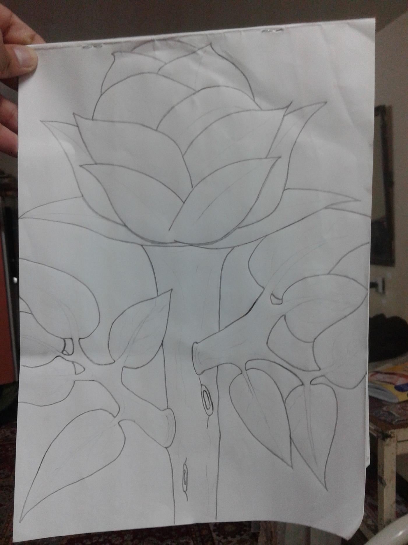精美的19款玫瑰花水彩素描欣賞