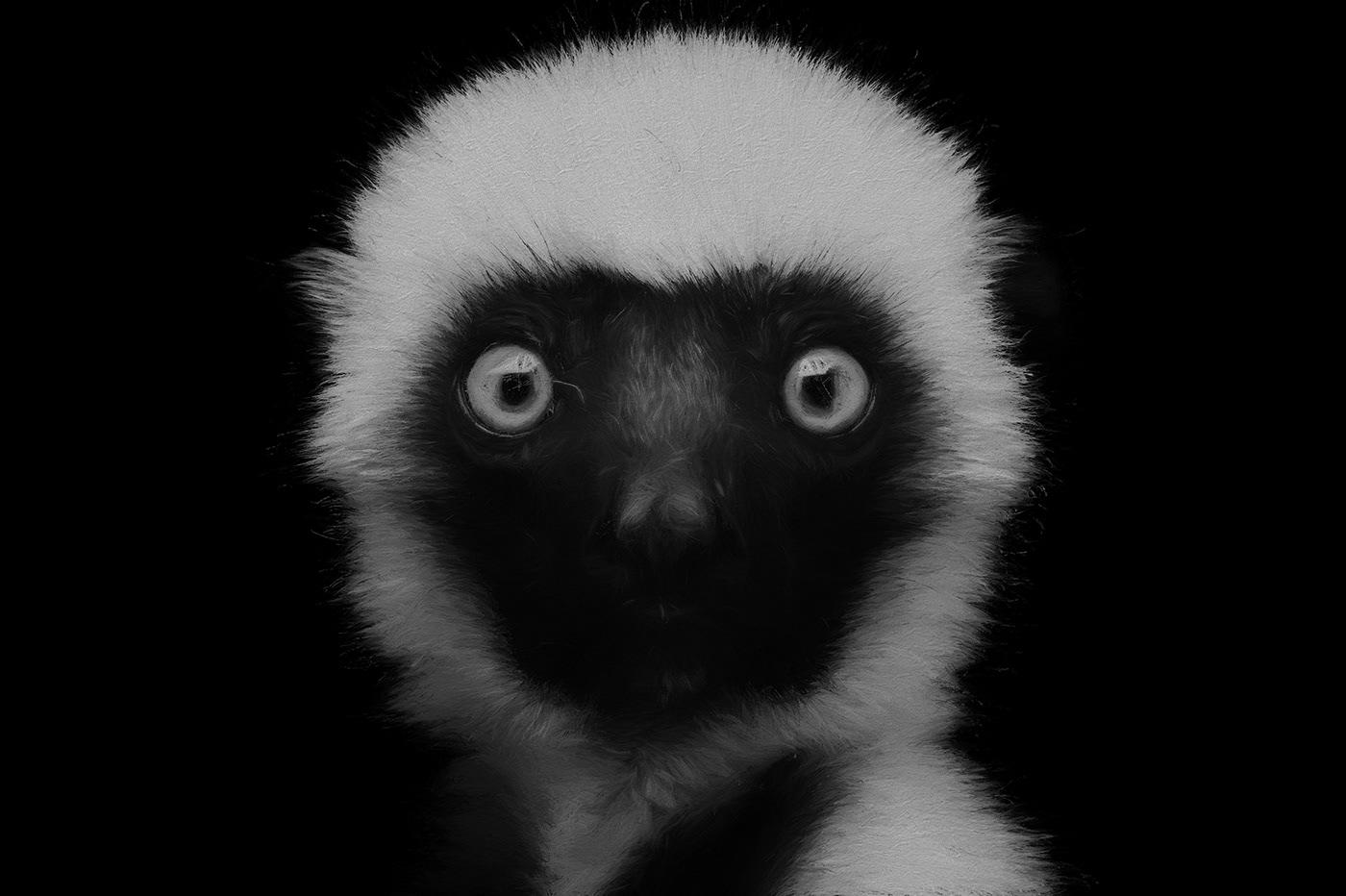 Image may contain: animal, black and mammal