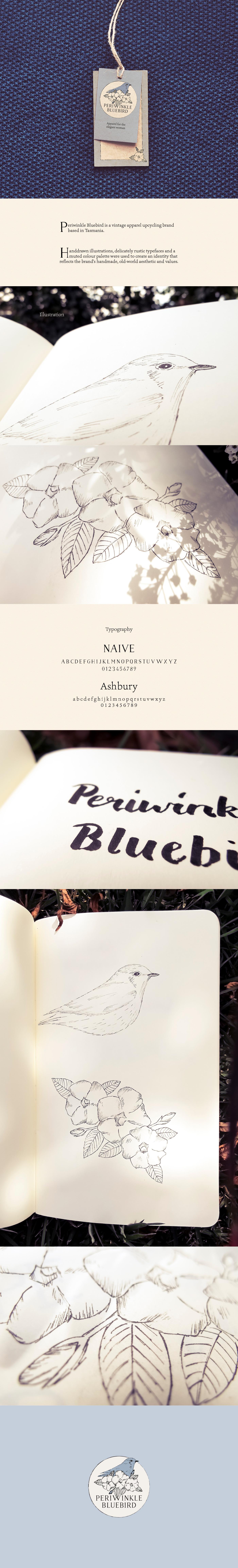 periwinkle BlueBird branding  ILLUSTRATION  Drawing  Nature Fashion  labels vintage tasmania