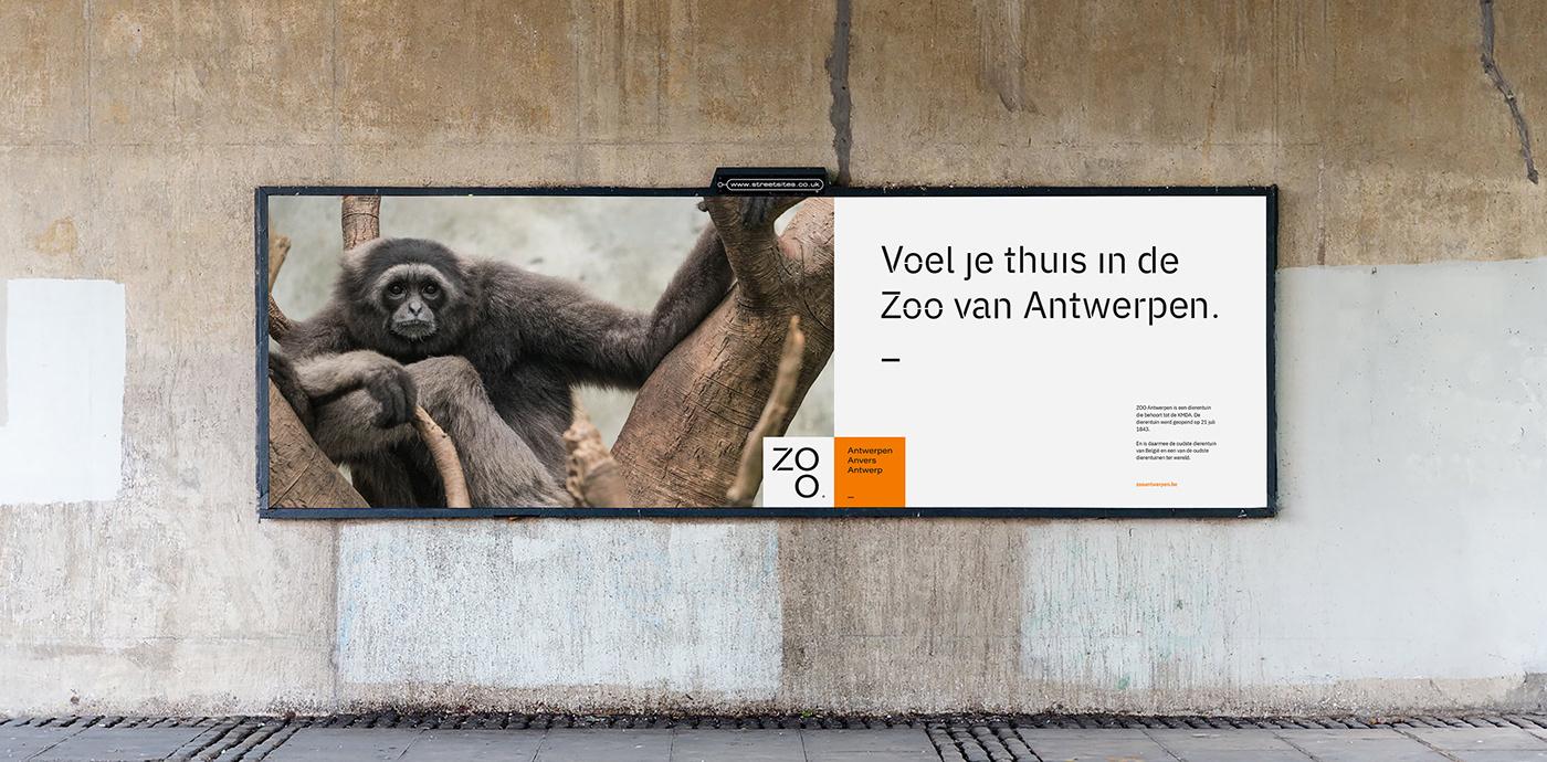 branding  bright custom typeface font rebranding zoo