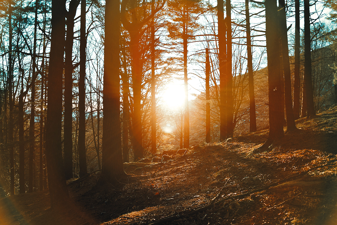 Photography  hiking mountain Sunrise winter cold france basque country forest Landscape