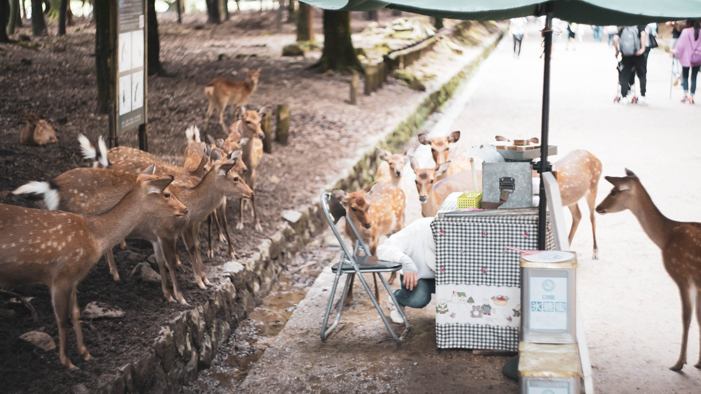 Photography ,Nara,DEERS,Urban,japan,a7iii,DEEERS,DEEEERS