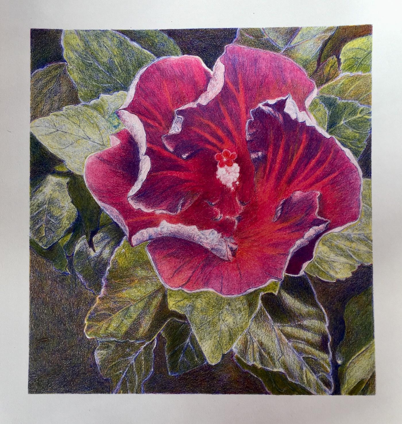Art&TheBloom fine art Floral design north carolina Frances Thrash Pam Braun Mark Weathington New Hanover County garden club
