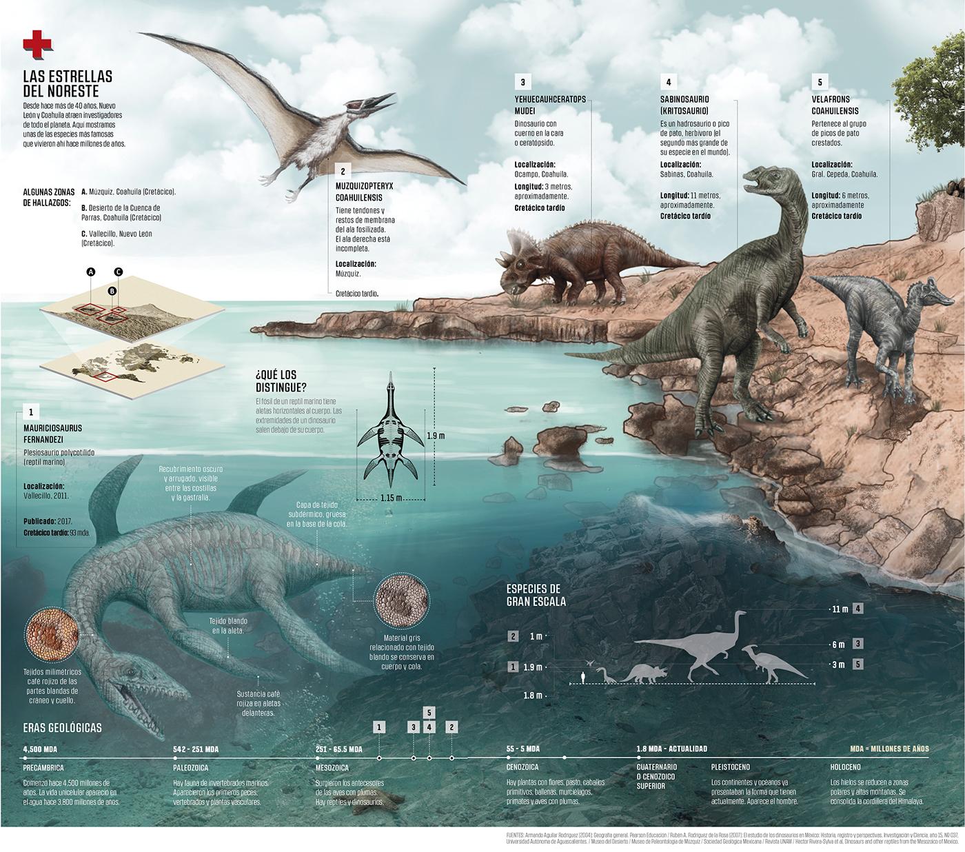 infographi ILLUSTRATION  ilustracion infografia dataviz Dinosaurios mexico Desierto information design
