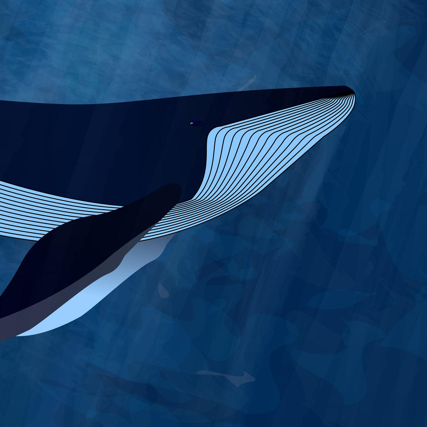 animal light Ocean sea underwater vector vector art water Whale