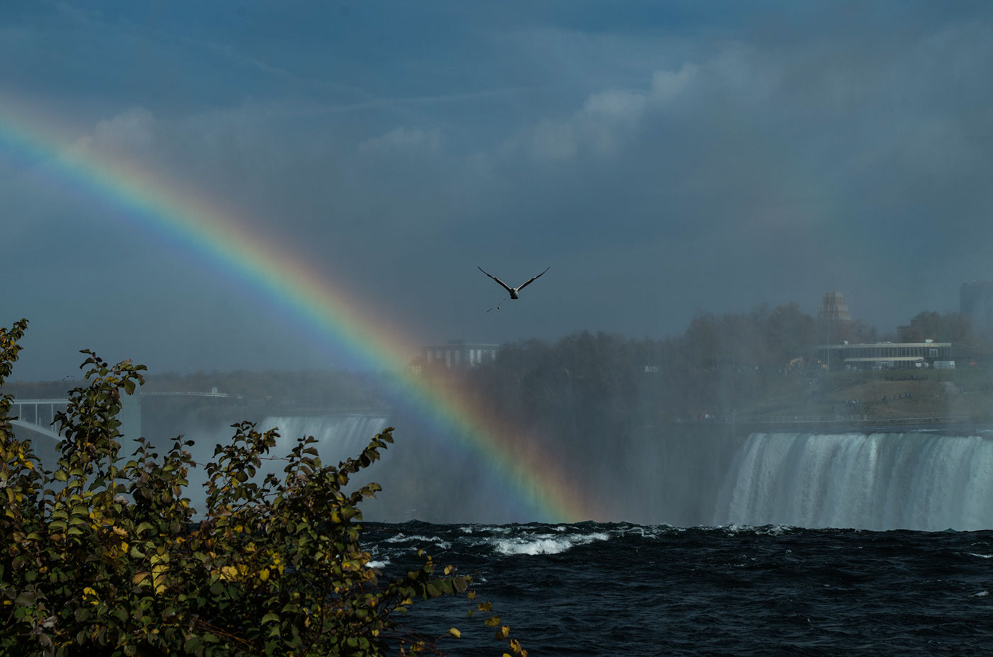 Rainbow and Gull