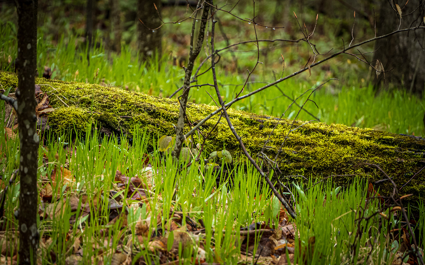 Cottage forest Kawartha landscapes Nature overcast plants spring trees