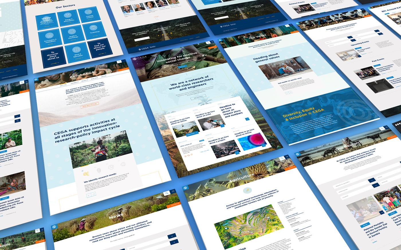 UI Web Design  berkeley design Website cega research Responsive ux ux/ui