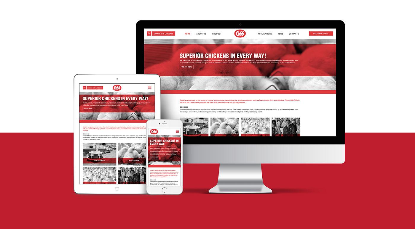 graphic design  Web Design  design web development  creative