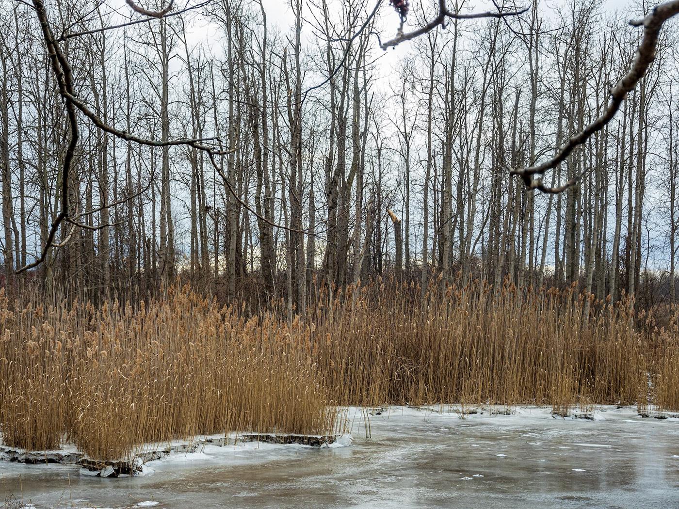 cardinal Lake Ontario Landscape Nature Park photo walk winter