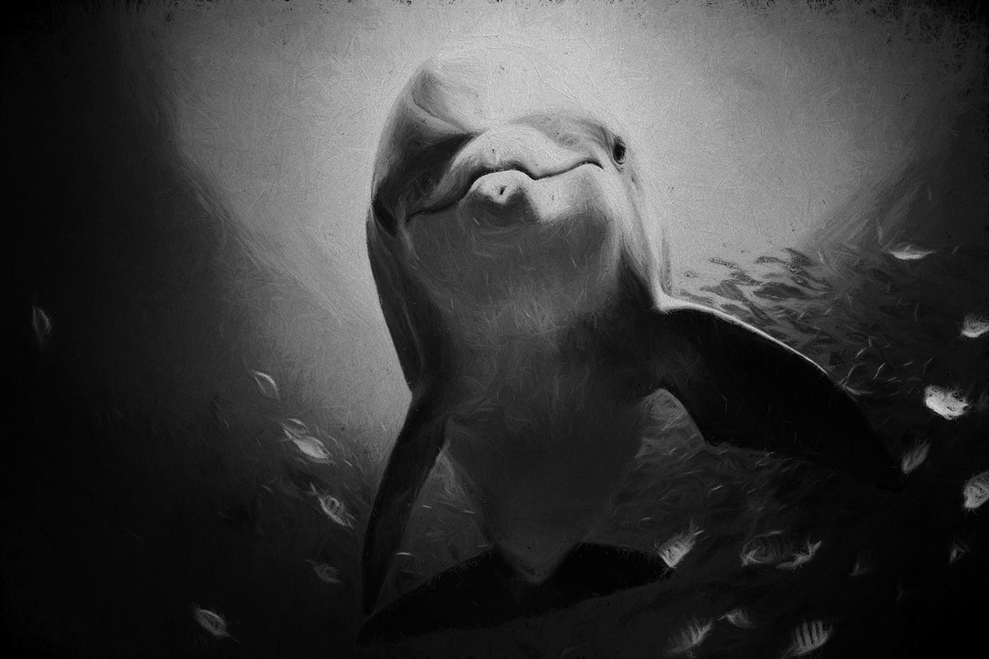 Image may contain: marine mammal, animal and black and white