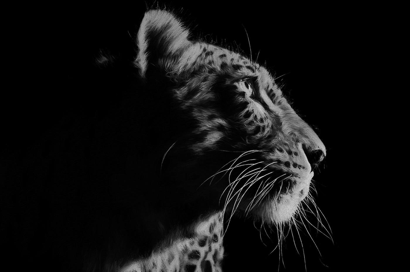 Image may contain: mammal, animal and carnivore