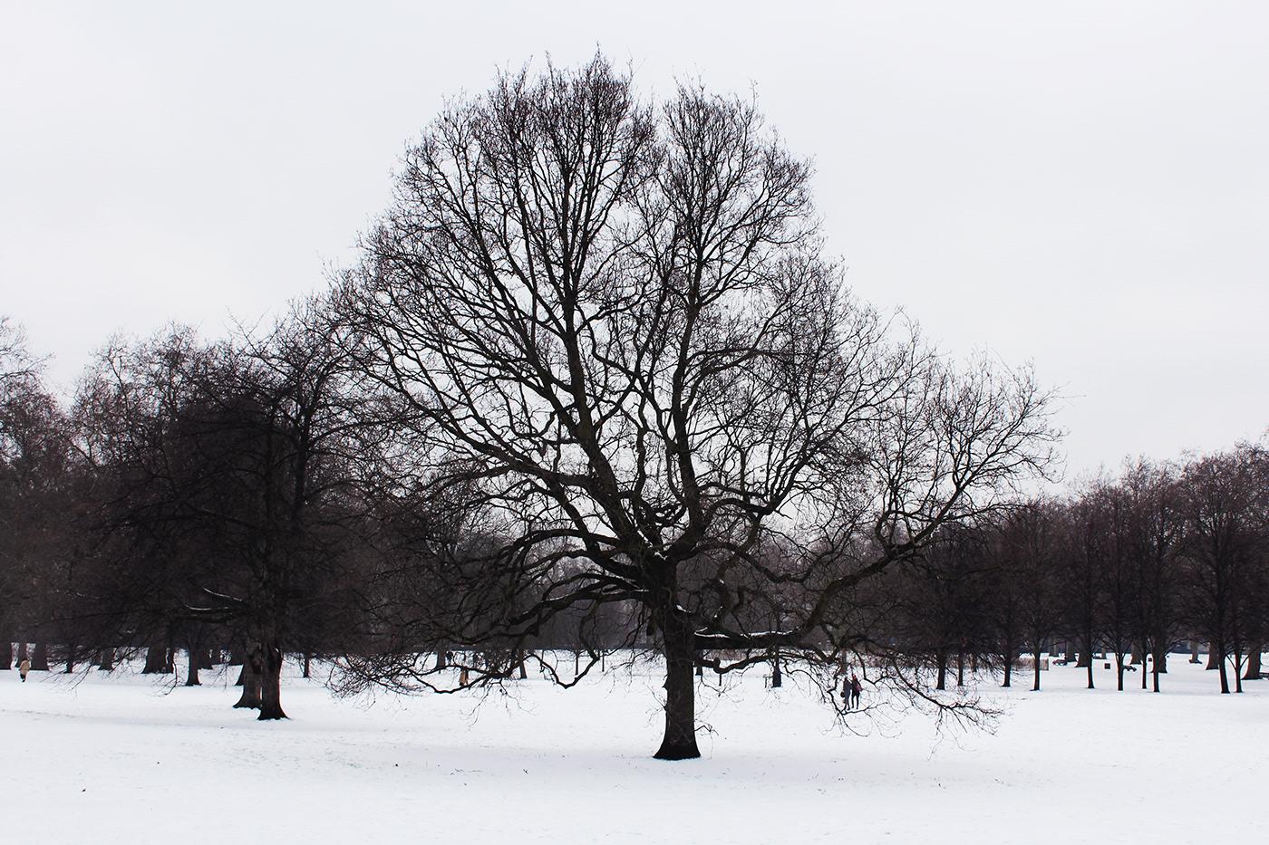 London UK snow Tree