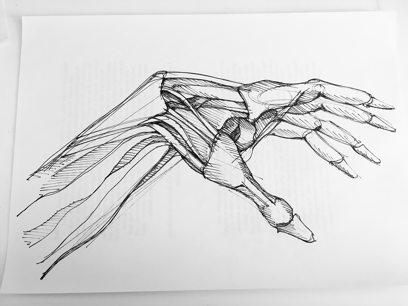 Human Anatomy Sketches On Student Show