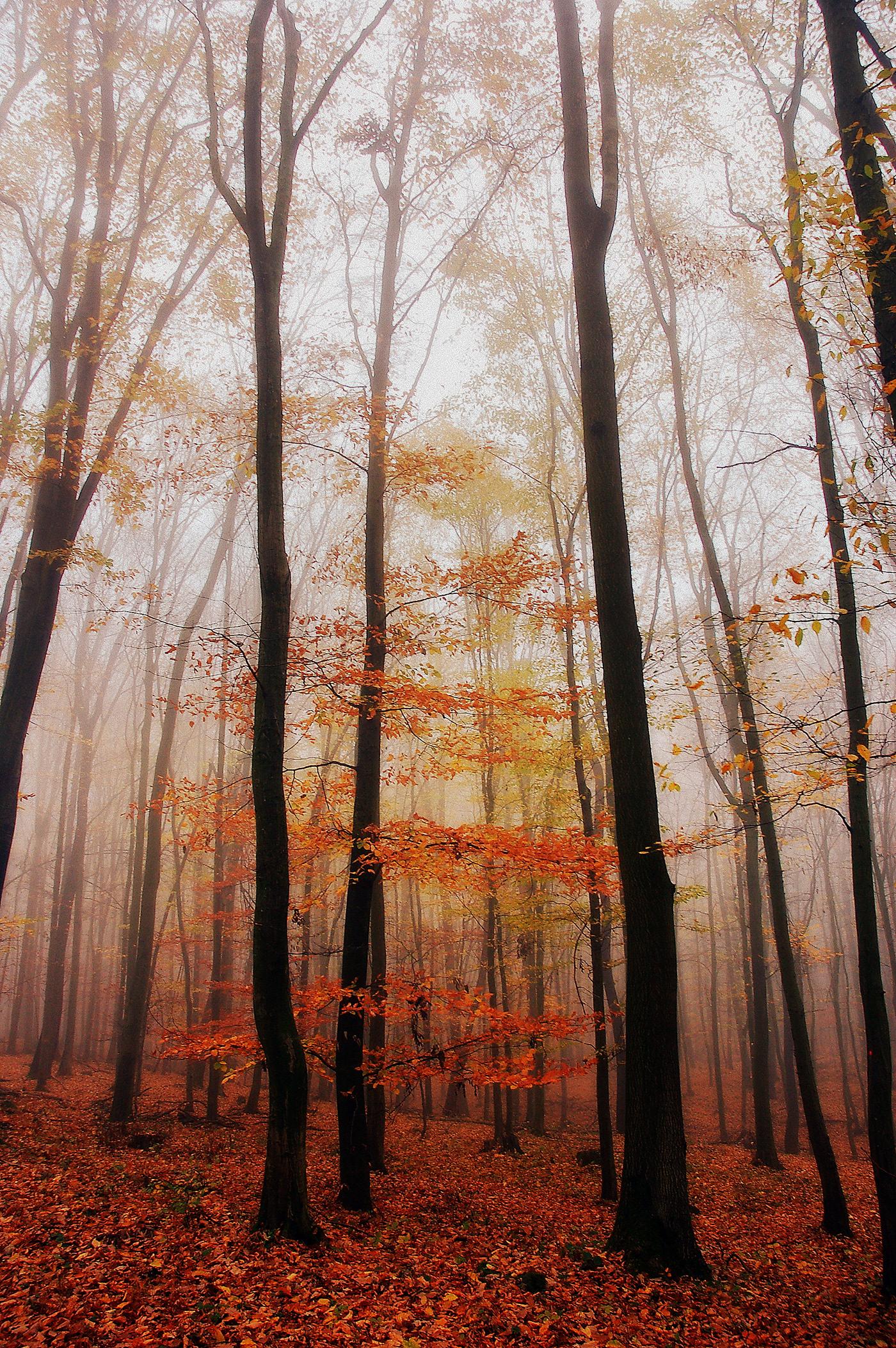 November autumn forest trees colors Carpathians foggy
