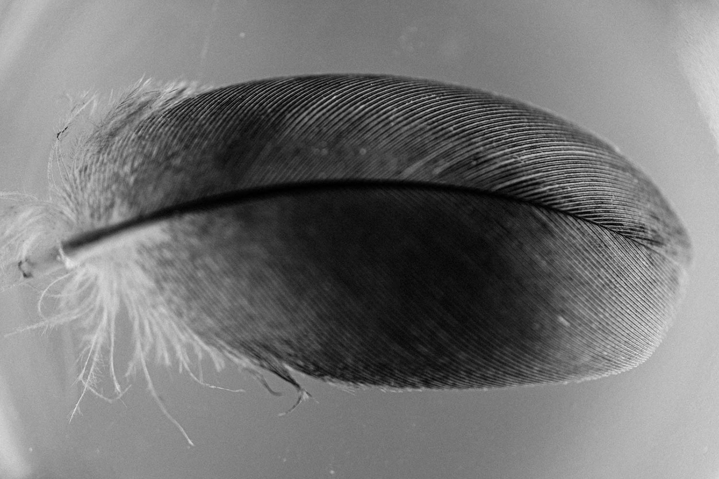 Black and white feather photograph