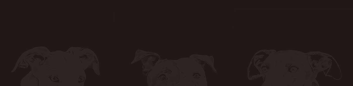 GALGO amorespeludos ILLUSTRATION  Invisibles adoptdontshop rescuedgogs freethegalgo design dogs