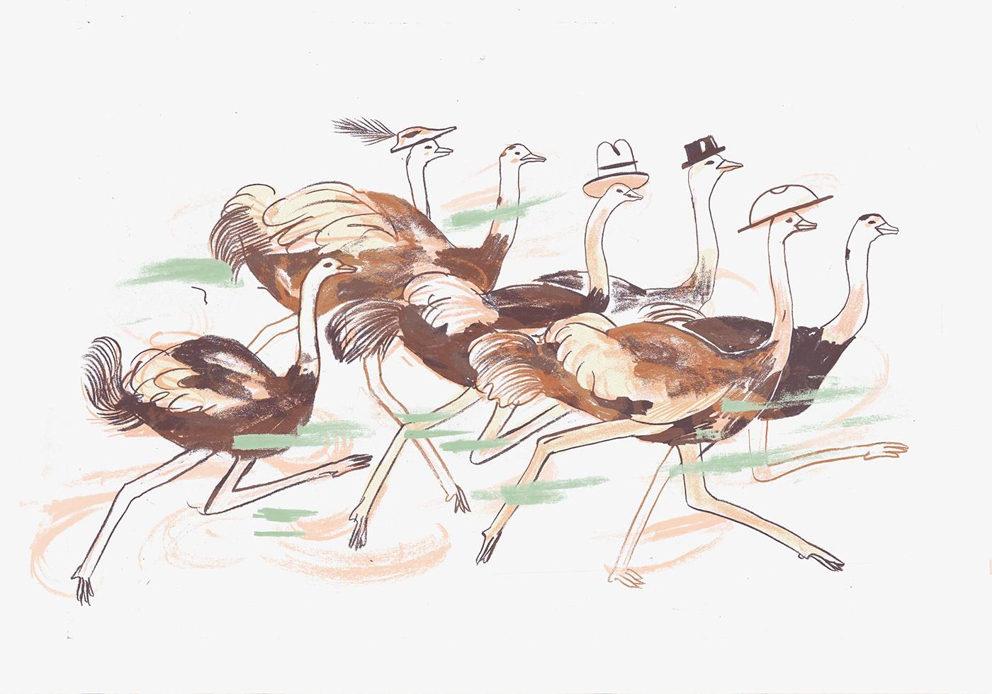 ostrich; ostriches; running; animals; fast food; hats; crazy hats; fun