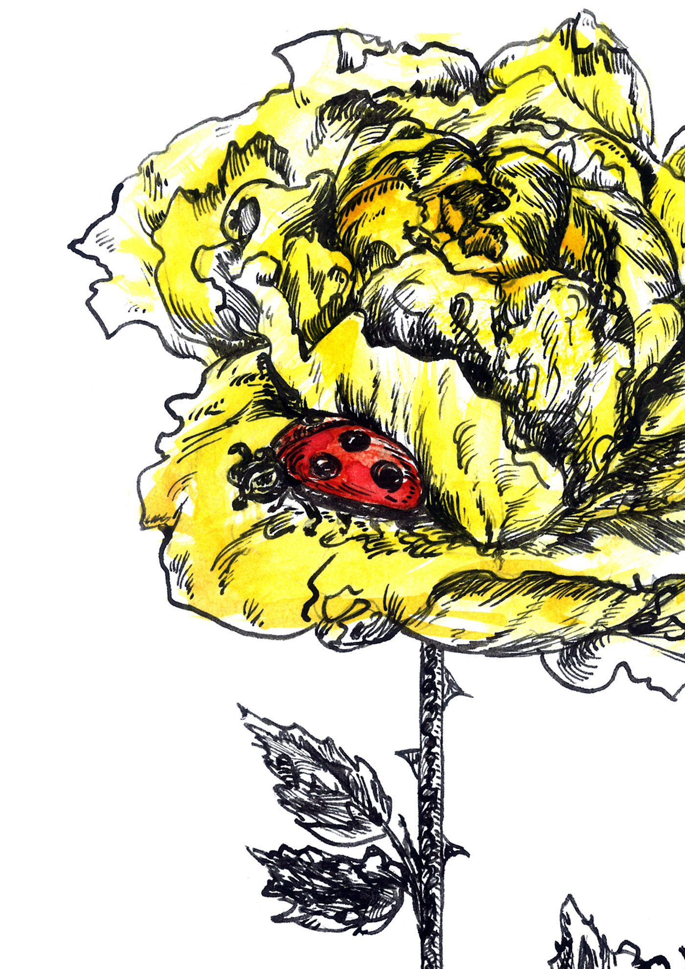 ink artwork rose flower yellow ladybug Drawing  ILLUSTRATION  watercolor Nature