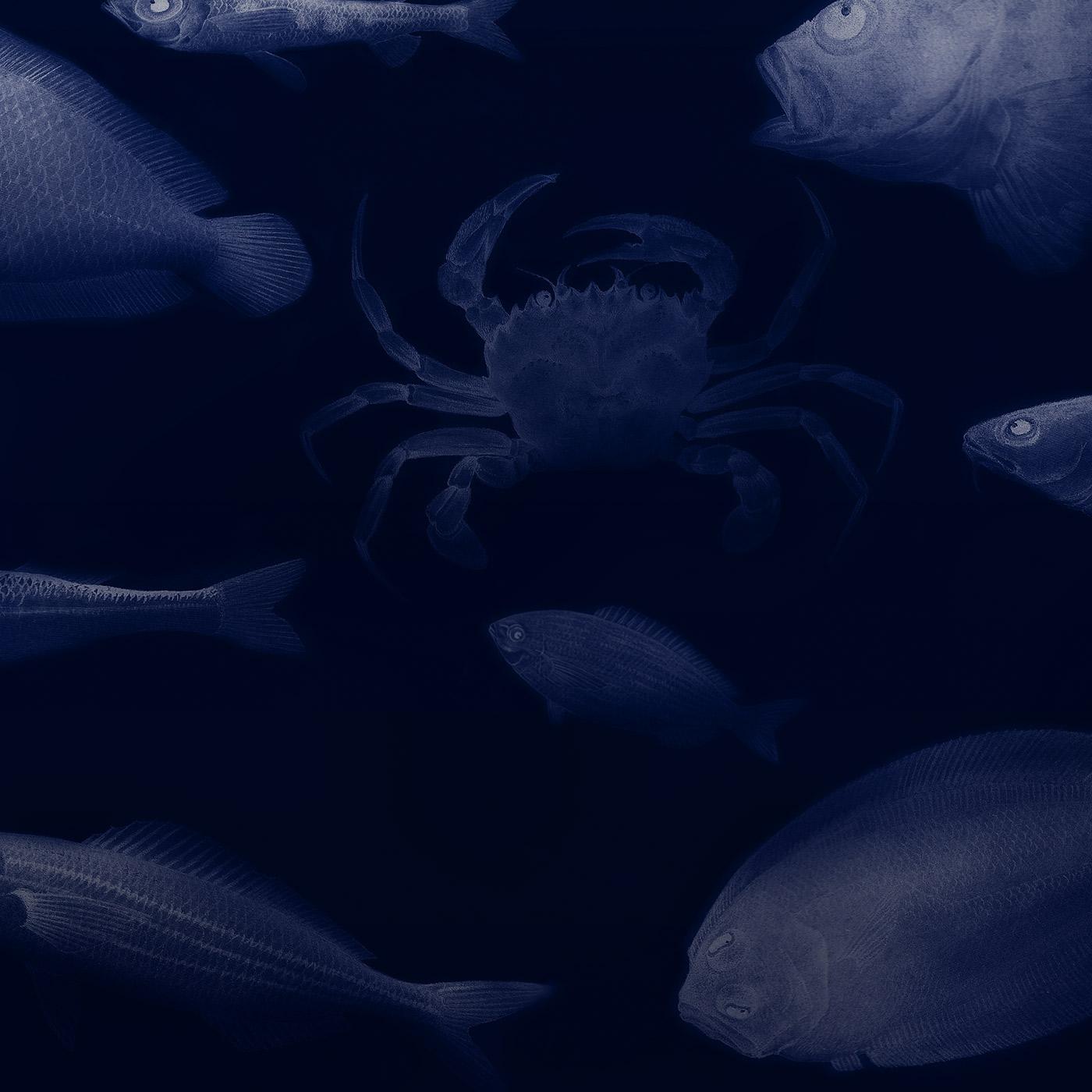 fish concept aquarium octopus market sea water blue cyan