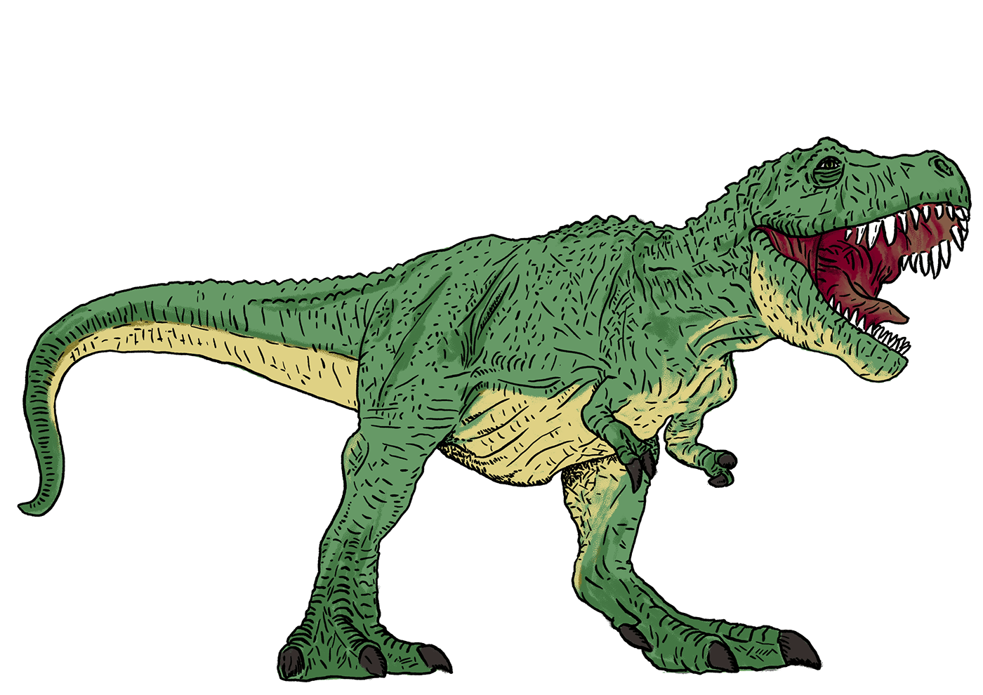 ankylosaure Dino dinosaure ILLUSTRATION  planche naturaliste pteranodon stegosaure trex triceratops wacom