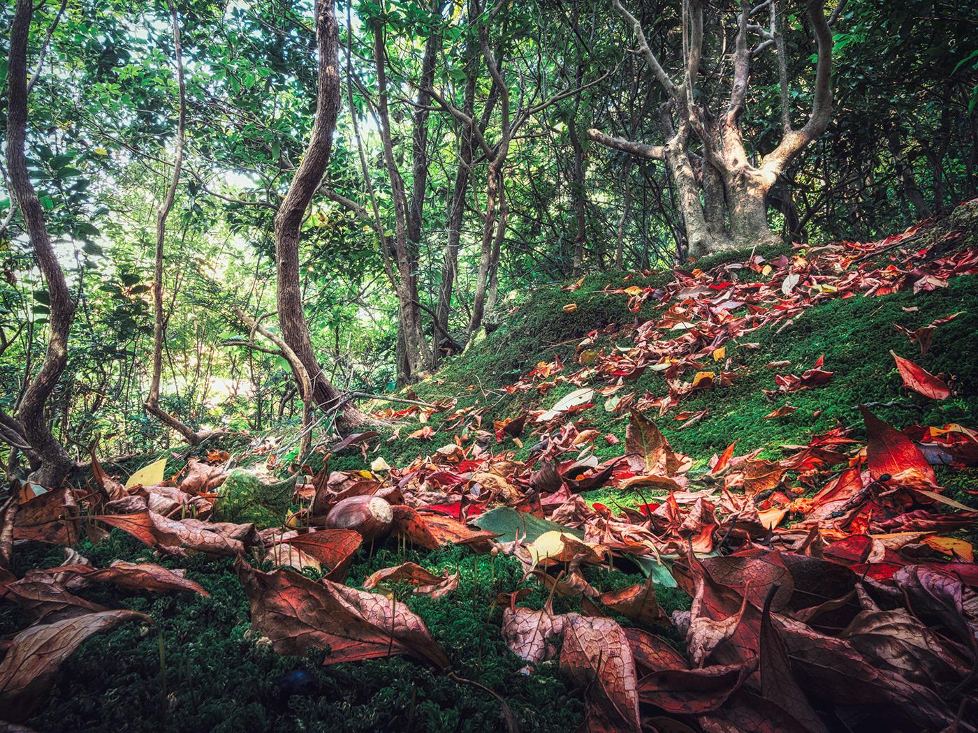 Autumn forest of dwarfs. Acorns are often lying around.
