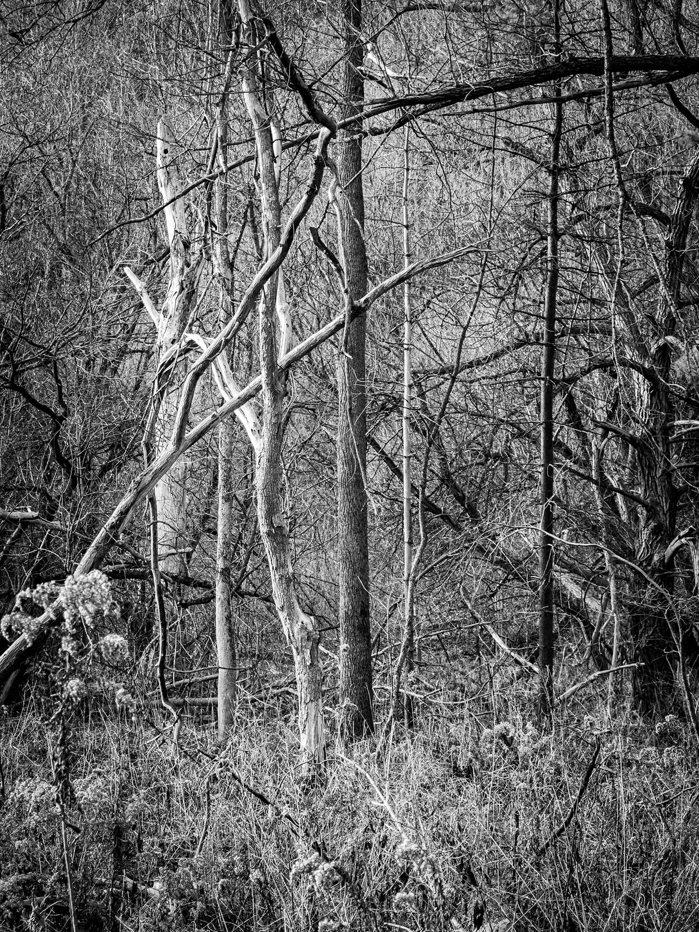 autumn forest Glen Rouge Park landscapes Nature photo walk