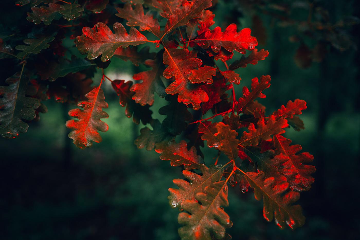 oak leaves in neon light