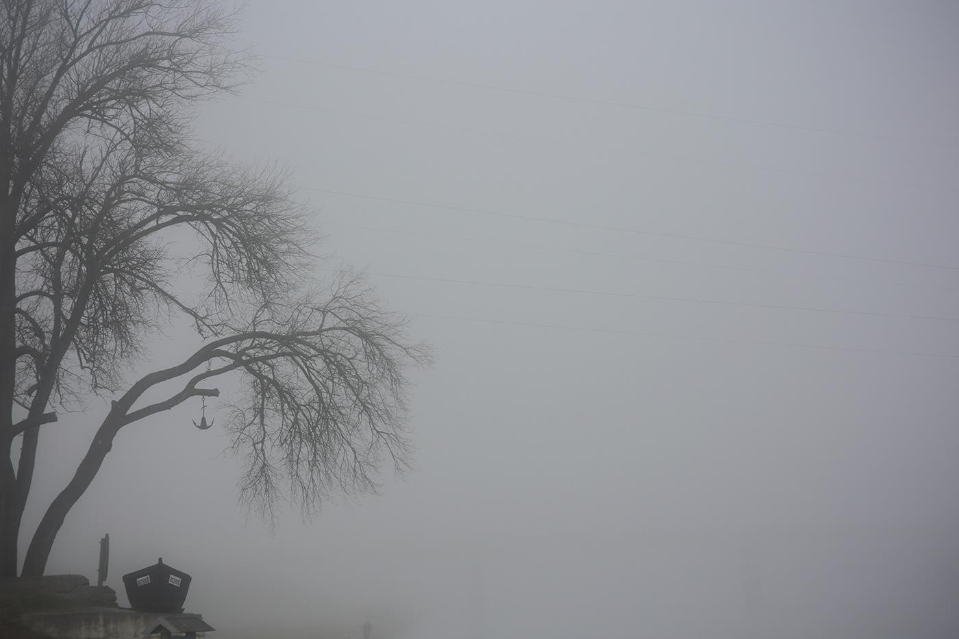 fog Fog Photography Landscape lietuva lithuania Mindaugas Buivydas mist tree art winter