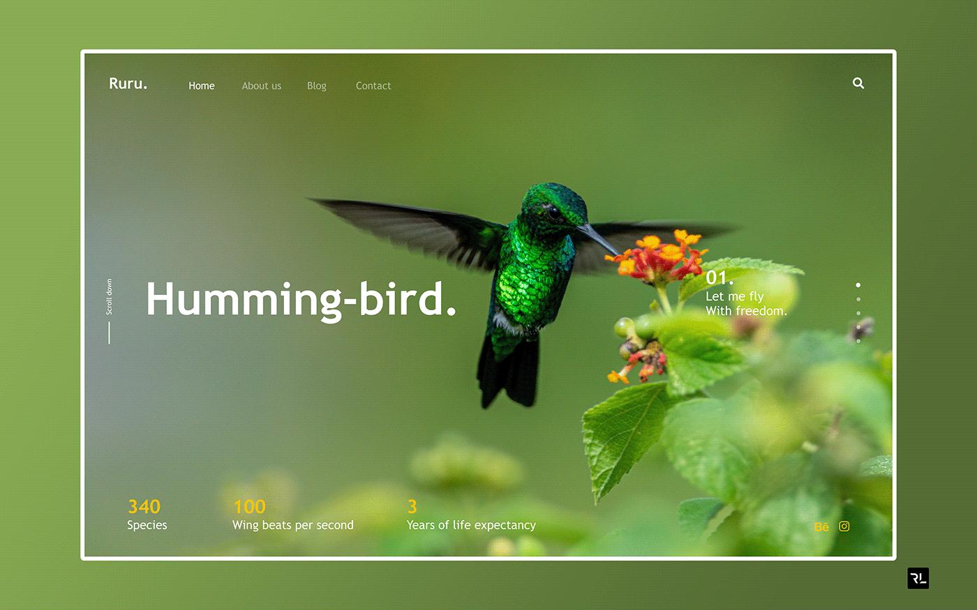Conception UI Design Birds