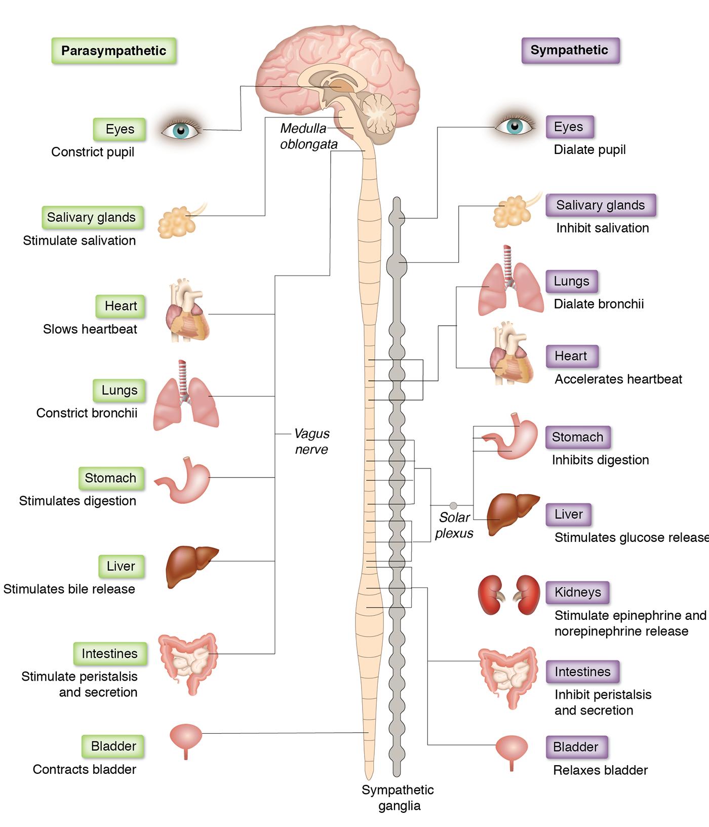 Human nervous system Part 1 | Teacher Rosmiza
