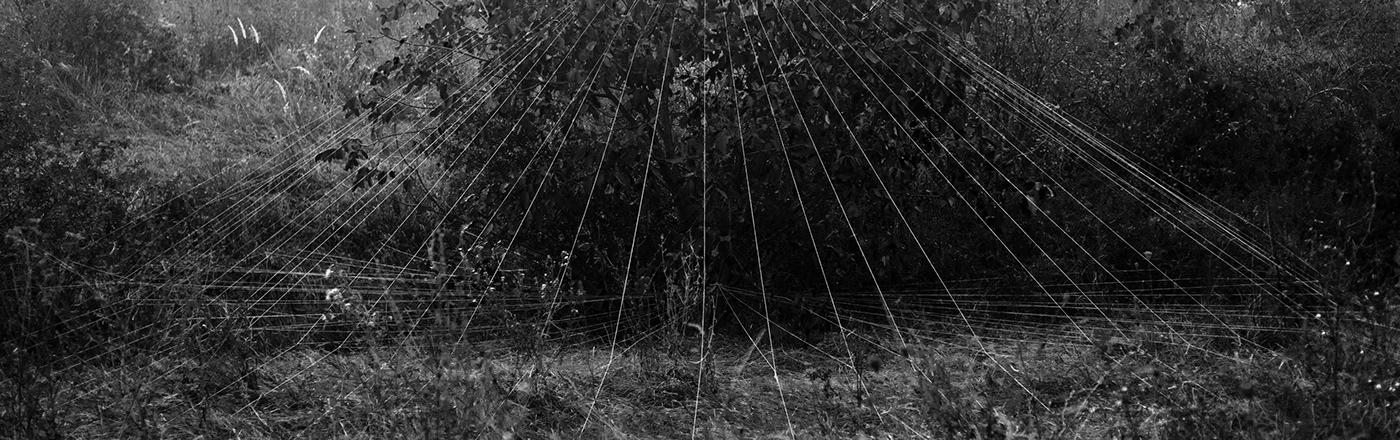 cone installation contemporary spring Nature Tree  fine art