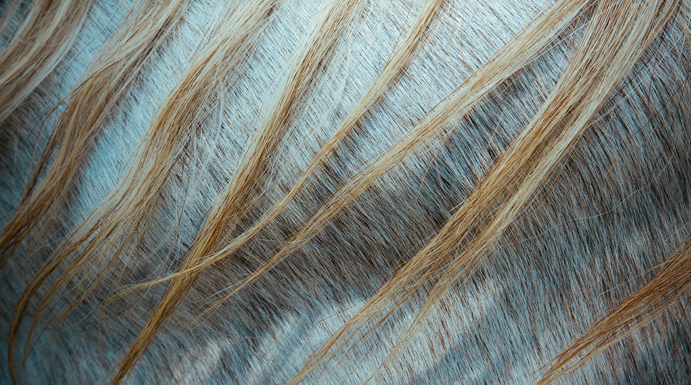 Visuals of Nordic Topline Brand Imagery - horse hair
