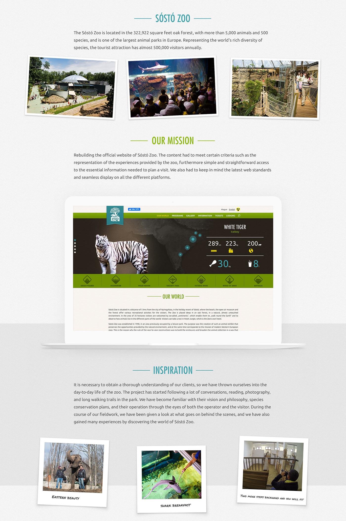 art direction  design Interaction design  Webdesign Website ux zoo