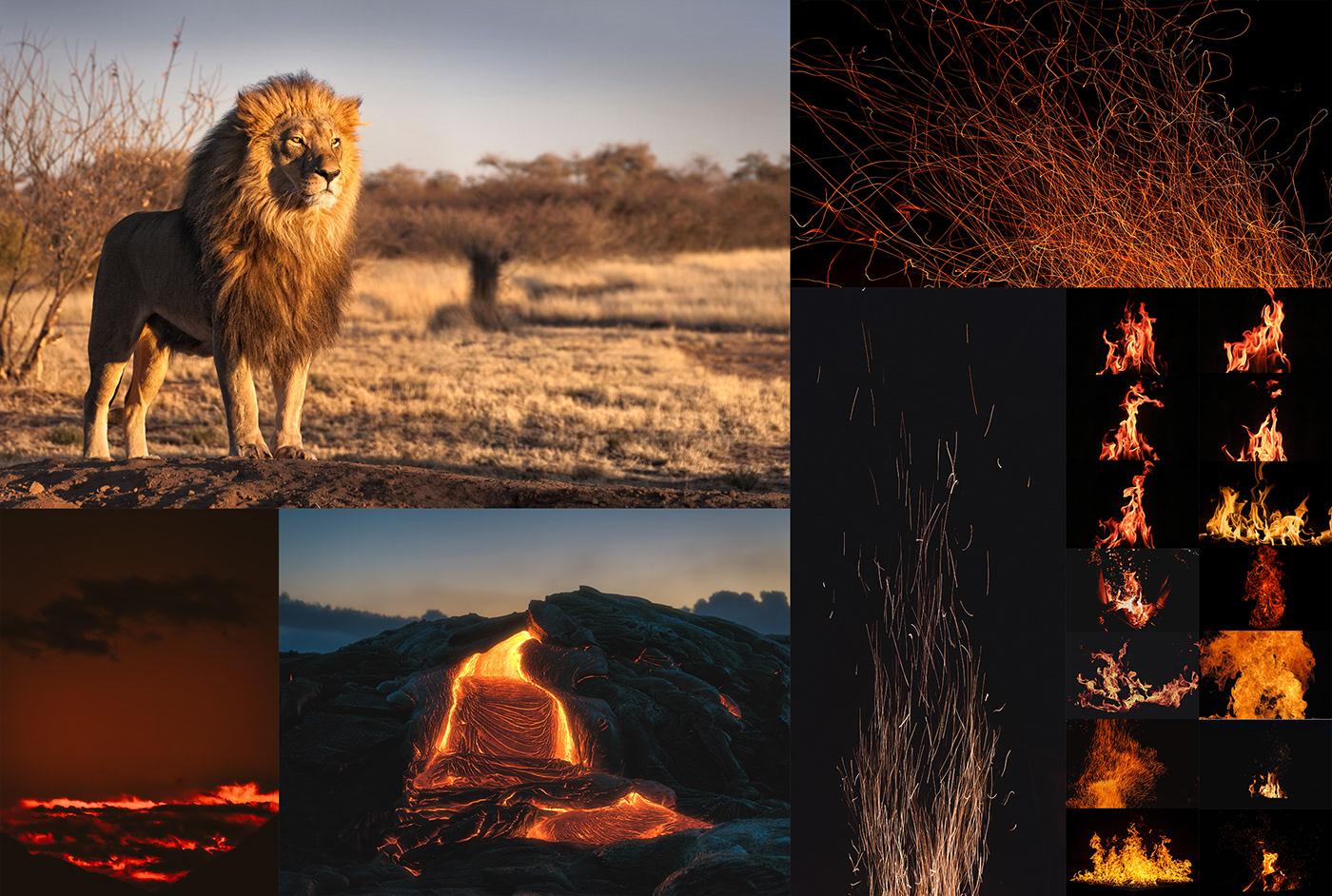 photoshop lion composition matte painting   graphic CGI fire photomanipulation lava