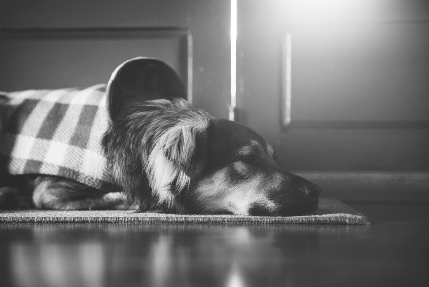 pet photography dogs Mutts fotografia de estimação