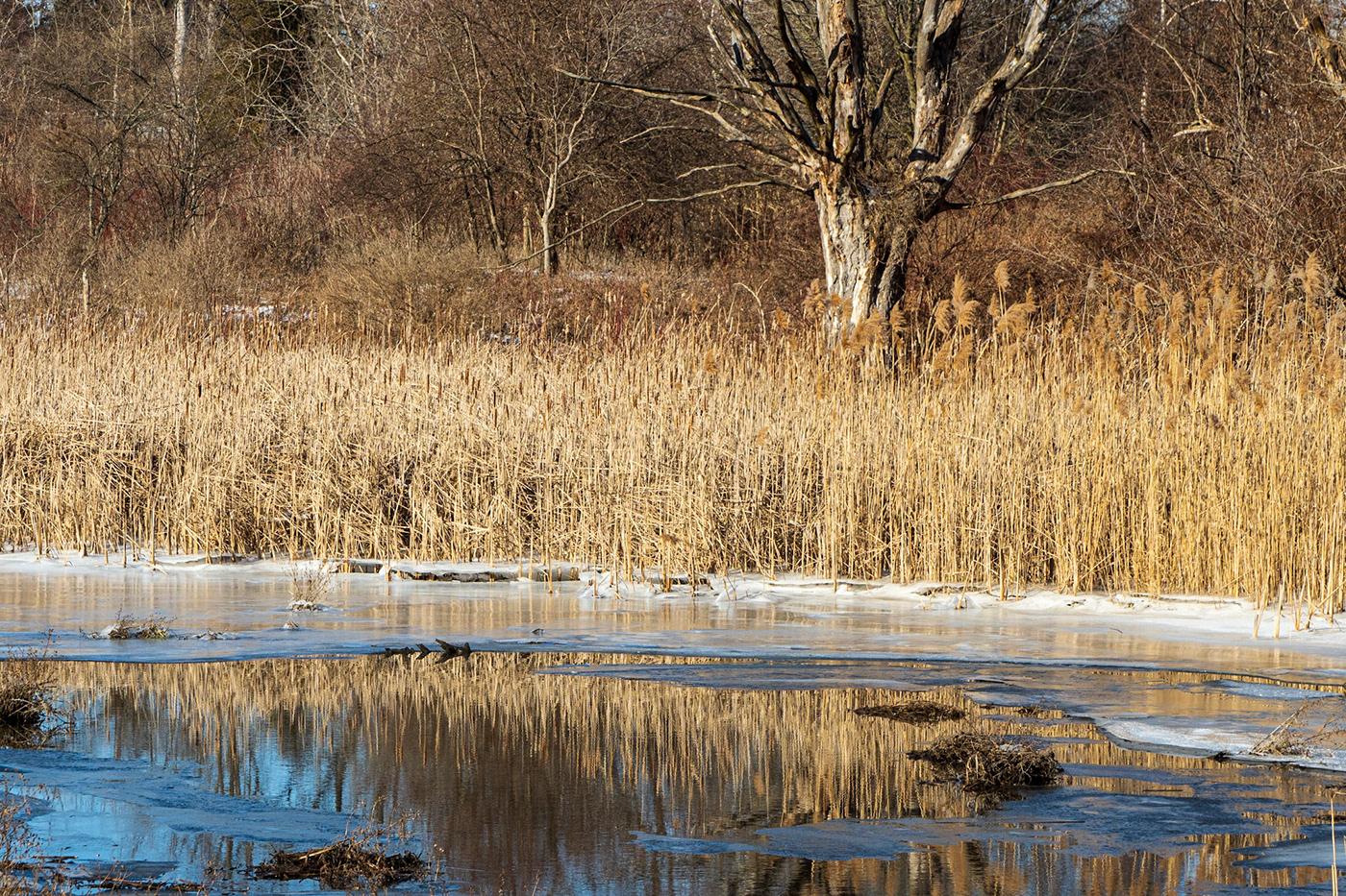 Nature photowalk pond wetland winter
