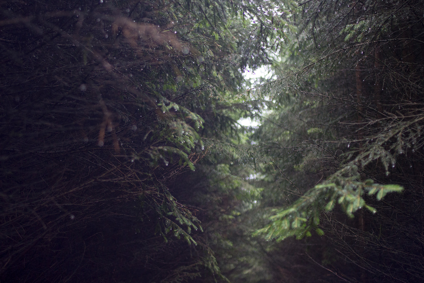 woods forest Nature photos Wiggle gif light
