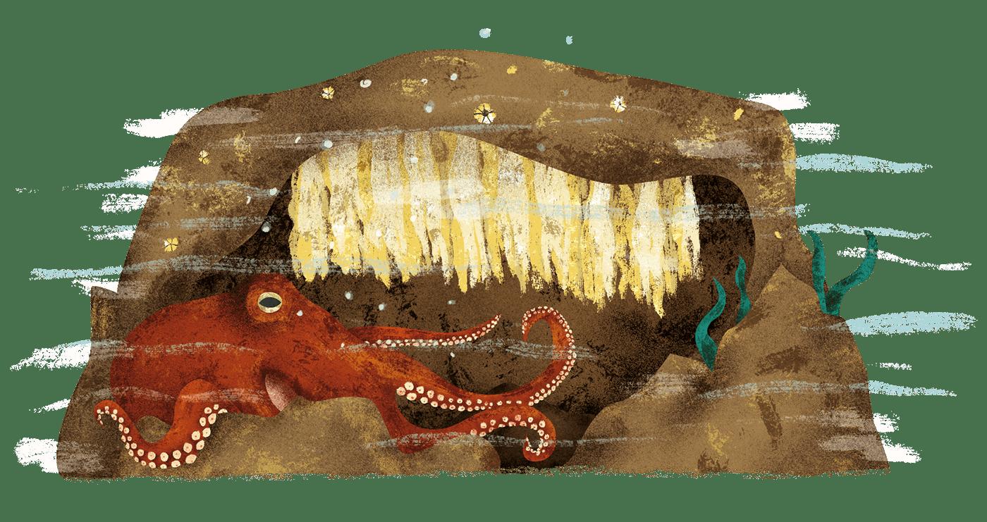 illustrations book children kidlit animals birds reptiles Nature history curriosities