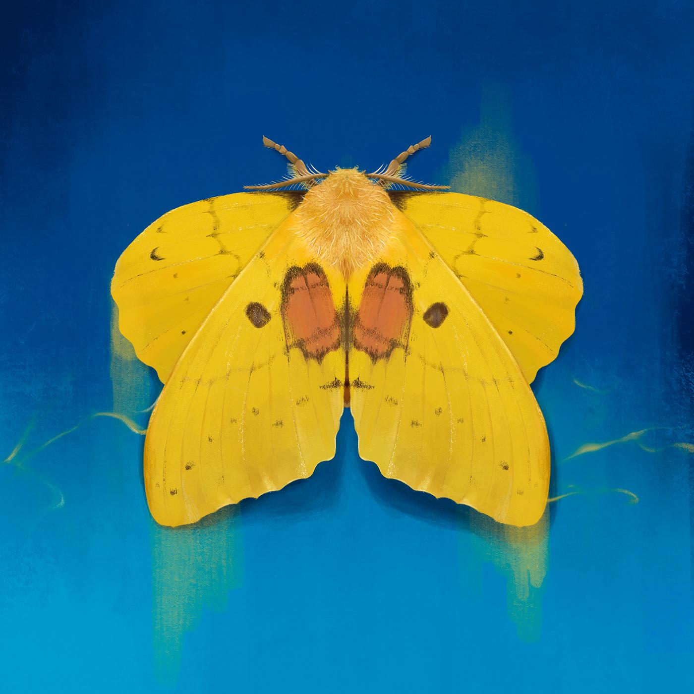 digital,moth,painting