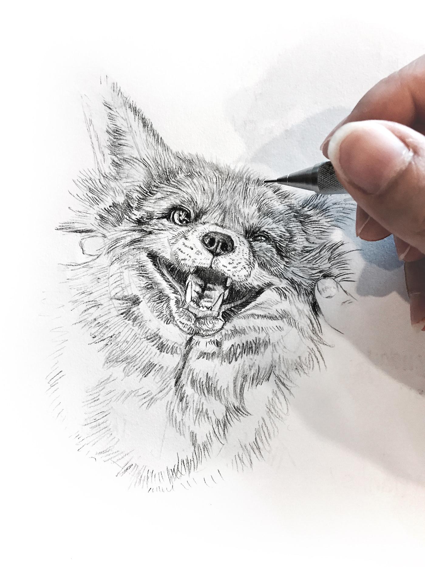 極美的26套鉛筆素描作品欣賞