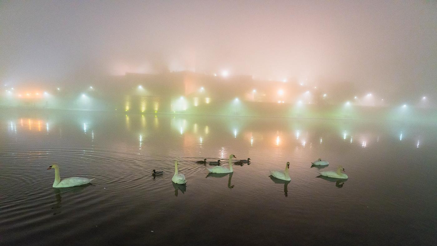 Image may contain: water, lake and bird