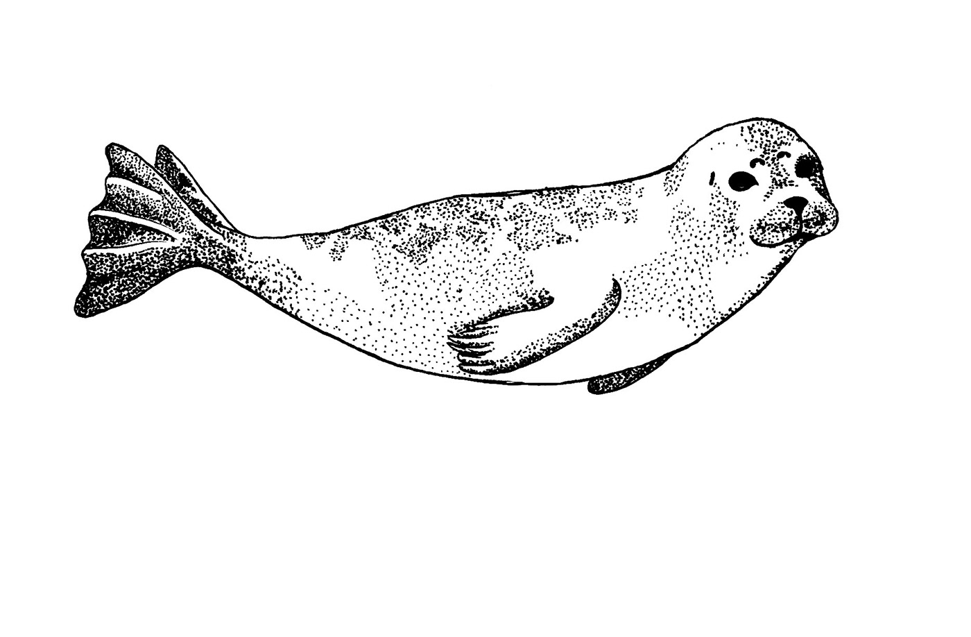 Image may contain: sketch, drawing and ray