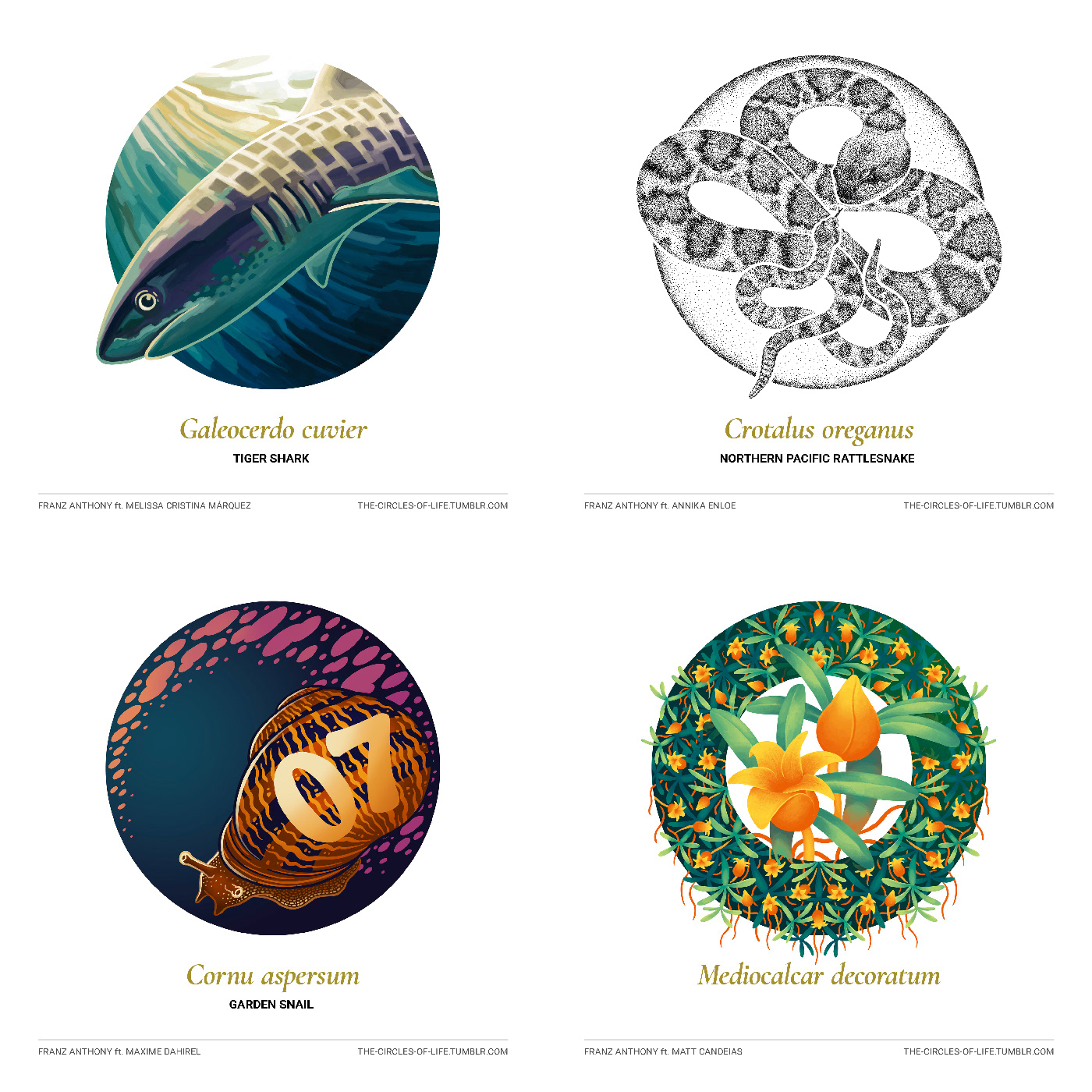 plants animals science Nature creatures floral circle White Minimalism biology