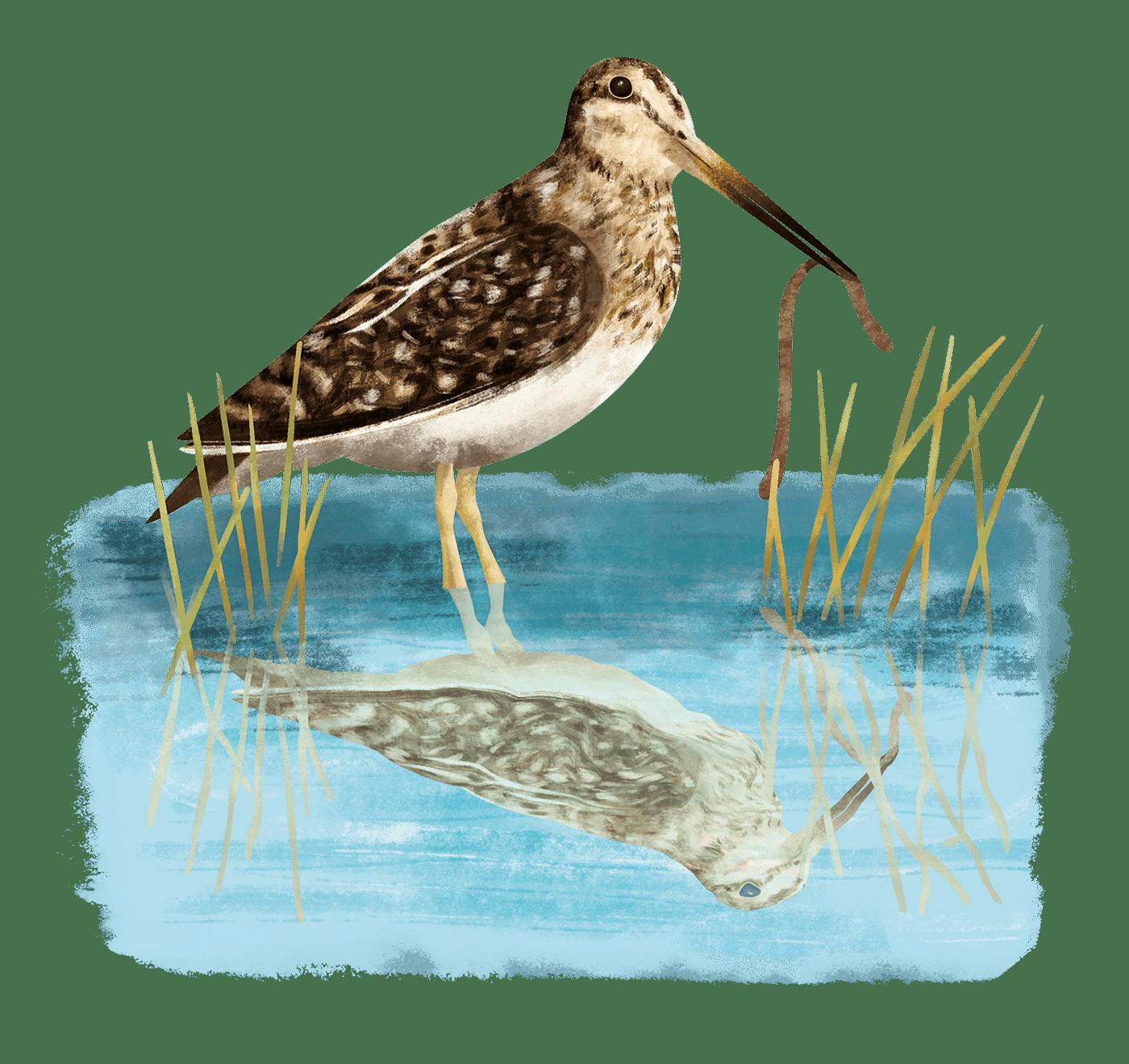 Bird Illustration birds book book cover book illustrations children book Encyclopedia Nature illustrations picturebook slovak illustration
