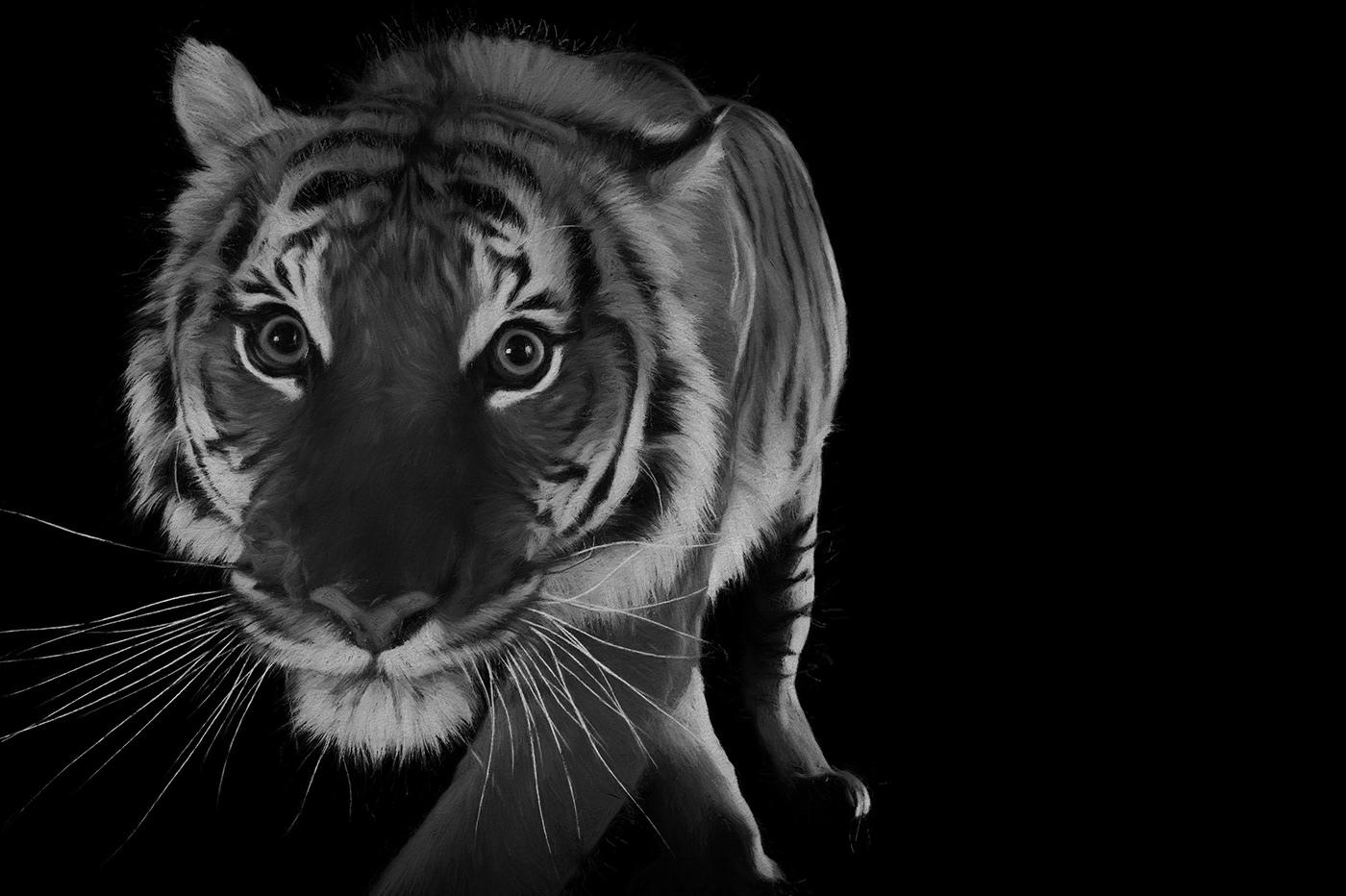 Image may contain: mammal, animal and big cat